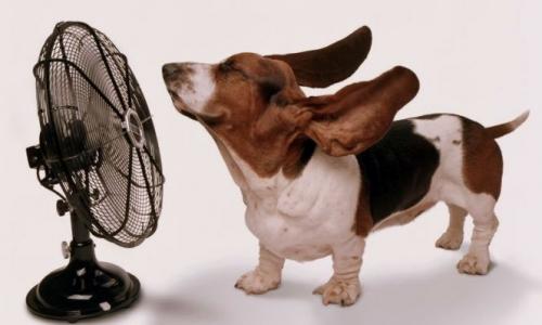 dog-fan-e1532391874345.jpg
