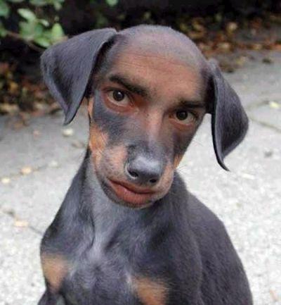 doghumanface.jpg