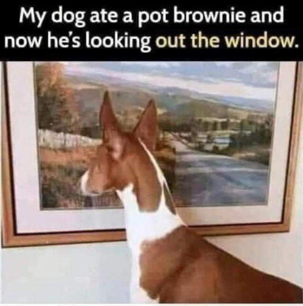 Pot Dog.jpg