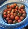 Tomatoes in Sieve.JPG