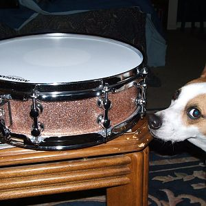 Lucy and my JRiolo custom piccolo snare