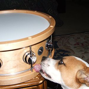 Lucy and my custom DW snare